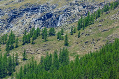 A high altitude mountain landscape. A mountain slope with pine trees and a small waterfall that descends from the glaciers in the National Park of Great Paradise Stock Photos
