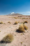 HIgh Andean Landscape Stock Photo