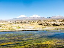 High Andean tundra landscape in the mountains of the Andes stock photo
