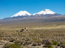 High Andean tundra landscape in the mountains of the Andes royalty free stock image
