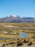 High Andean tundra landscape in the mountains of the Andes stock photos