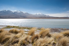 High Andes Lake, Bolivia Royalty Free Stock Photo