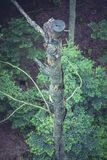 High Angle Photo of Brown Wood Trunk Royalty Free Stock Photos