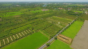 High angle photo showing Thai farming area. Which is the main occupation of most Thais Stock Photography