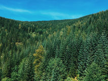 High Angle Photograph of Green Forest Trees Royalty Free Stock Images