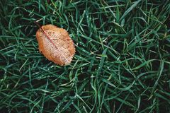 High Angle Photography of Brown Leaf on Grass Stock Image