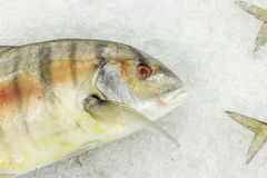 High Angle Raw Fresh Fish Chilling on Bed of Cold Ice in Seafood Market of Bali island, Indonesia. High Angle Raw Fresh Fish Chilling on Bed of Cold Ice in Stock Image