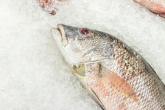 High Angle Raw Fresh Fish Chilling on Bed of Cold Ice in Seafood Market of Bali island, Indonesia. High Angle Raw Fresh Fish Chilling on Bed of Cold Ice in Stock Photos