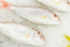 High Angle Raw Fresh Fish Chilling on Bed of Cold Ice in Seafood Market of Bali island, Indonesia. Stock Photo