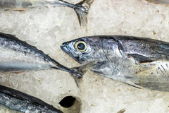 High Angle Raw Fresh Fish Chilling on Bed of Cold Ice in Seafood Market of Bali island, Indonesia. Stock Photography