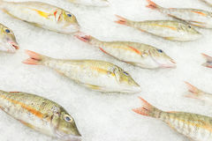 High Angle Raw Fresh Fish Chilling on Bed of Cold Ice in Seafood Market of Bali island, Indonesia. Royalty Free Stock Photos