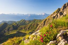 Free High Angle Shot Of A Beautiful Lonely Bush With Red Flowers In The Rocky Mountains Stock Photography - 163359482