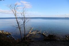 Free High Angle Shot Of Dry Trees On The Body Of The Water At Trelde Naes, Denmark Stock Images - 171164914