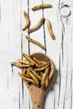 Edible fried worms Stock Photos