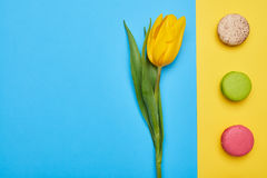 High angle of single yellow tulip with a line of macaroons Royalty Free Stock Photo
