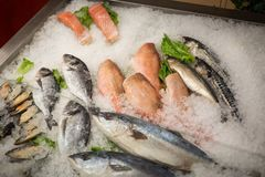 High Angle Still Life of Variety of Raw Fresh Fish Chilling on B. Ed of Cold Ice in Seafood Market Stall,Fresh seafood on ice in the showcase,Salmon on cooled Stock Photo