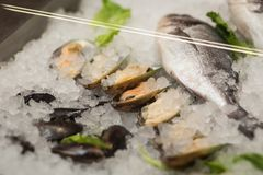 High Angle Still Life of Variety of Raw Fresh Fish Chilling on B. Ed of Cold Ice in Seafood Market Stall,Fresh seafood on ice in the showcase,Salmon on cooled Royalty Free Stock Photo