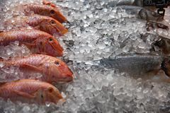 High Angle Still Life of Variety of Raw Fresh Fish Chilling on Bed of Cold Ice in Seafood Market Stall royalty free stock image