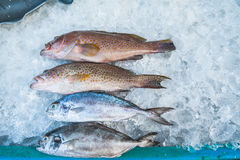 High Angle Still Life of Variety of Raw Fresh Fish Chilling on Bed of Cold Ice in Seafood Market Stall. With Copy Space Decorative frozen raw sea fish on Royalty Free Stock Photo