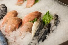 High Angle Still Life of Variety of Raw Fresh Fish Chilling on B. Ed of Cold Ice in Seafood Market Stall,Fresh seafood on ice in the showcase,Salmon on cooled Stock Photography