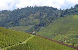 Durbach vineyards. High angle view across vineyards on a slope towards a Forest area , Durbach Ortenau Baden Germany Royalty Free Stock Photo