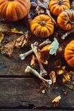 Halloween concept of bones among pumpkins. High angle view of bones among pumpkins and dry autumn leaves against wooden background Royalty Free Stock Photography