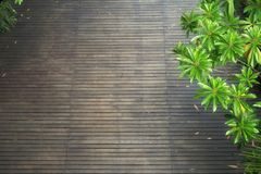 Dark wooden floor with lush foliage trees in summer. High angle view of dark wooden floor with lush foliage trees in summer. Sri Nakhon Khuean Khan Public Park stock photo