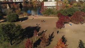 High angle view of dog park near Austin Texas. A high angle aerial establishing shot of pet owners playing with their dogs at the Auditorium Shores Dog Park on stock video