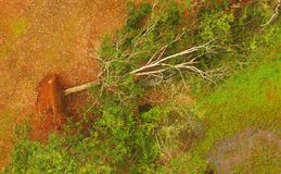 Aerial view of uprooted trees after heavy storm Stock Photography