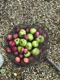 Net of Fresh Fruit royalty free stock photography