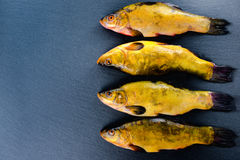High angle view of fresh tench fish on slate background, close u. P Royalty Free Stock Image