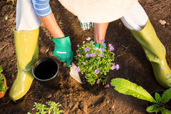 High angle view of gardener using trowel for planting at garden Stock Photo
