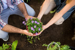 High angle view of gardeners holding potted plants at garden Royalty Free Stock Photography