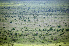 High angle view of a green plain, Kruger National Park, Mpumalanga, South Africa Stock Photography