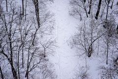 High angle view of leafless trees covered with snow. High angle view of leafless trees covered with white snow stock images