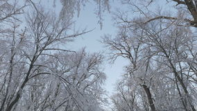 High angle view looking up at the branches of a snow covered forest stock video footage