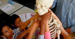Multi-ethnic school kids fixing skeleton model in classroom at school 4k. High angle view of multi-ethnic school kids fixing skeleton model in classroom at stock video footage