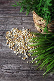 Natural pebbles and greenery Royalty Free Stock Photo