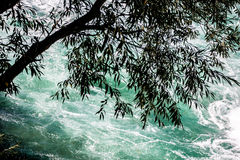 Free High-Angle View Of Tree Hanging Over Rushing River Royalty Free Stock Photography - 60169157