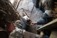 High angle view of old man with unkempt long gray hair feeding c Royalty Free Stock Image