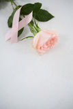 High angle view of pink Breast Cancer ribbon and rose. On white background