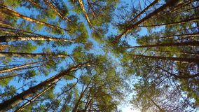 High angle view of rotating pine trees in the forest stock video