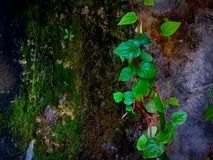 High Angle View Of Small Plant Growing On Land royalty free stock photo
