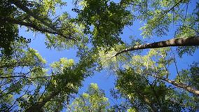 High angle view at the top of the wind swinging trees stock footage