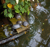High angle view of tortoises on stone at Allan Royalty Free Stock Photos
