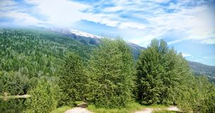 High angle view of trees growing on mountain. During sunny day Royalty Free Stock Photo