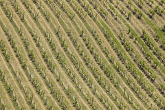 High angle view of vineyard Stock Photos