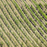 High angle view of vineyard Stock Photo
