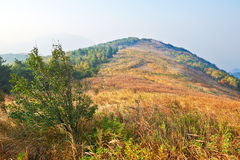 The high autumn mountain meadow Royalty Free Stock Photo