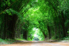 The high bamboo cover the clay road Royalty Free Stock Photo